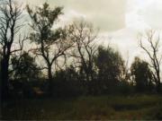 Парк в усадьбе Столыпиных в селе Ивашевка Починковского района Нижегородской области, фото Галины Филимоновой