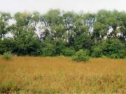 Усадьба Столыпиных в селе Ивашевка Починковского района Нижегородской области, фото Галины Филимоновой