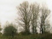 Крест на месте Никольской церкви и остатки усадебного парка в селе Ключищи Спасского района, фото Галины Филимоновой