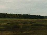 Лес Оболенских в Спасском районе, фото Галины Филимоновой