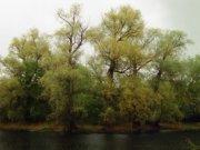 Парк в усадьбе Карамзиных, фото Галины Филимоновой